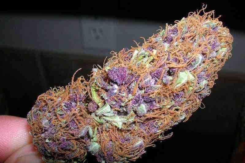 Purple Haze test