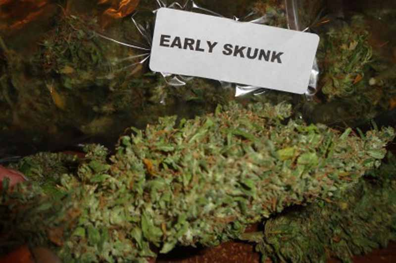 early skunk test autofloraison