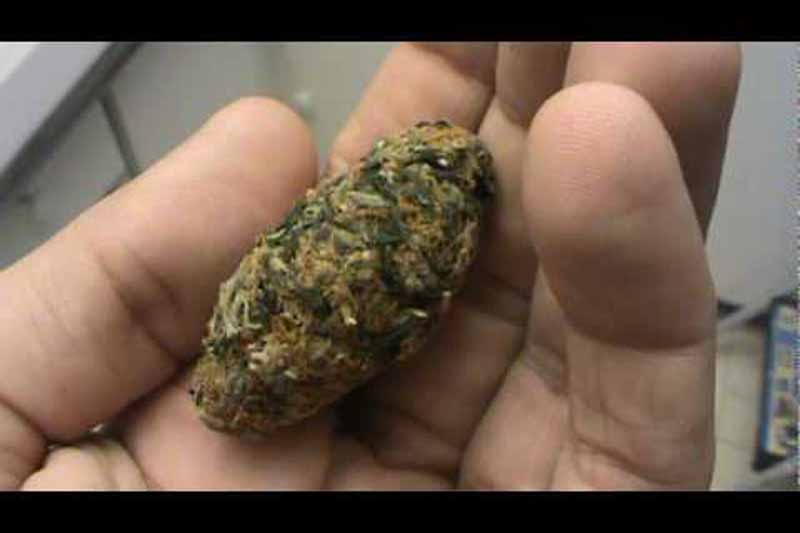 orange bud test
