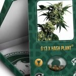 mr nice g13 x hash plant prix