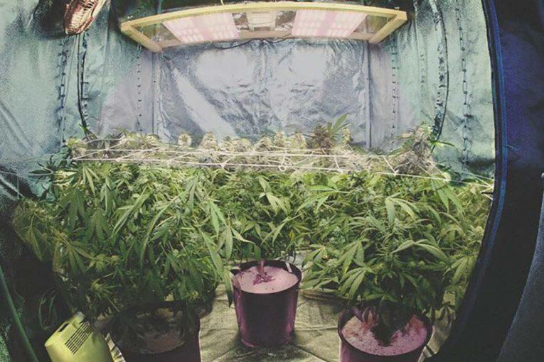 Comment faire pousser du cannabis en intérieur?