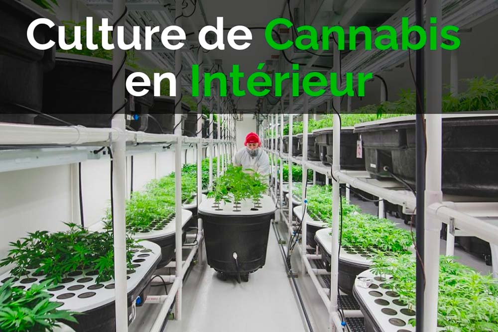 Culture indoor: Le guide complet