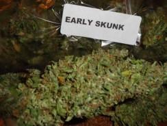 Early Skunk autofloraison informations variété